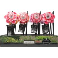 Coleman Cable - Summer Blooms Stake Light Display - Multi -