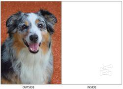DogTales4You - Bernie Staring Card-BLANK-#58 - 5x7 Inch