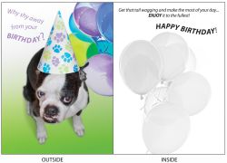 DogTales4You - Chance Birthday Card #5 - 5x7 Inch