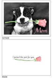 DogTales4You - Pablo Rose Card #6 - 5x7 Inch