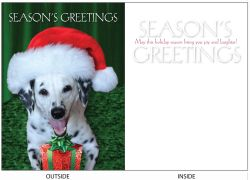 DogTales4You - Daisy Santa Hat Card #66- 5x7 Inch