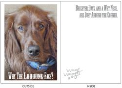 DogTales4You - Aeden Long Face Card-ENCOURAGEMENT-#22 - 5x7 Inch