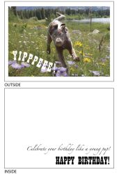 DogTales4You - Holly Floating Card #23 - 5x7 Inch