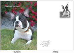 DogTales4You - Max Gazing Card #16 - 5x7 Inch