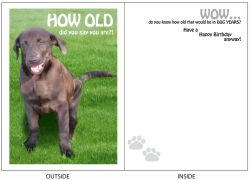 DogTales4You - Holly Laughing Card #24 - 5x7 Inch