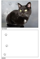DogTales4You - Maggie Cat Card #50 - 5x7 Inch