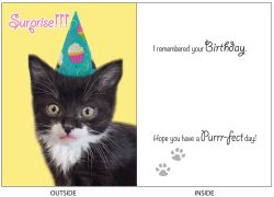 DogTales4You - Midi Surprise Card #49 - 5x7 Inch