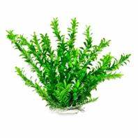 Aquatop Aquatic Supplies - Anacharis Like Aquarium Plant - Green - 12 Inch