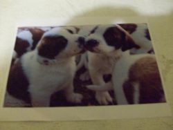Fine Crafts - Puppy Love Jigsaw Puzzle