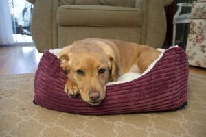 Iconic Pet - Luxury Lounge Pet Bed - Imperial Purple - Small