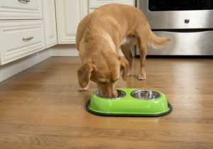Iconic Pet - Color Splash Stainless Steel Double Diner (Green) for Dog/Cat - 8 oz