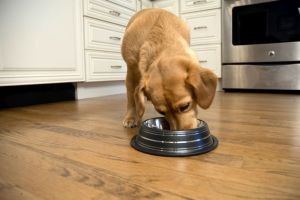 Color Splash Stripe Non-Skid Pet Bowl for Dog or Cat - Black - 16 oz