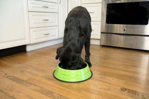 Iconic Pet - Color Splash Stripe Non-Skid Pet Bowl for Dog or Cat - Green - 8 oz