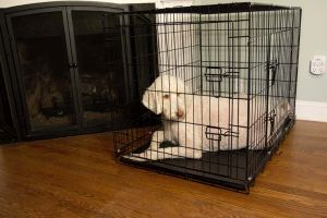 """Iconic Pet - Foldable Double Door Crate with Divider - 42"""""""