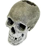 Blue Ribbon Pet Products - Exotic Environments Life-Like Human Skull
