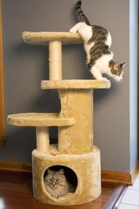 Iconic Pet - Dual Post Cat Tree Condo Tower - Beige