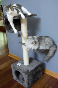 Iconic Pet - Three Level Cat Tree Condo with Hammock - Grey