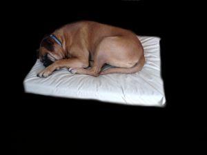"Enrych Pet - Prison Bed Standard 27"" x 36"" x 4"""