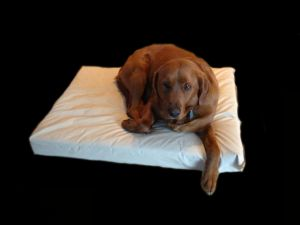 "Enrych Pet - Prison Bed - Large 35"" x 45"" x 4"""