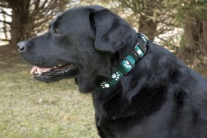 Paw Print Adjustable Collar - Green - 0.39 x 7.9/11.8 Inch