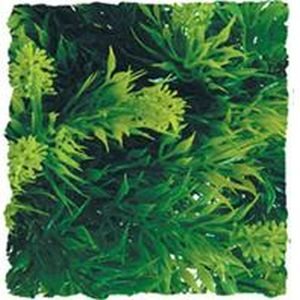 Zoo Med - Natural Bush Malaysian Fern Plant -  GREEN SMALL/14 INCH