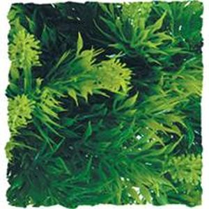 Zoo Med - Natural Bush Malaysian Fern Plant - GREEN - MEDIUM/18 INCH