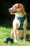 Your Pefect Puppy - Your Perfect Harness - Green X - Small