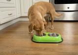 Color Splash Stainless Steel Double Diner (Green) for Dog/Cat - 8 oz