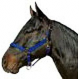 Horse And Livestock Prime - Halter Leather Crown Econ - Blue - Cob