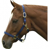 Horse And Livestock Prime - Premium Halter Chin With Snap - Navy - Average