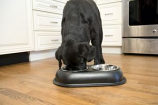 Color Splash Stainless Steel Double Diner (Black) for Dog/Cat - 1 Quart