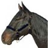 Horse And Livestock Prime - Halter Leather Crown Econ - Black - Cob