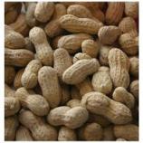 Alpine Dairy Inc. - #1 Fancy Peanut With Shell - 50 Pound