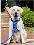 Your Pefect Puppy - Your Perfect Harness - Blue X - Small