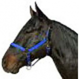 Horse And Livestock Prime - Halter Leather Crown Econ - Blue - Large